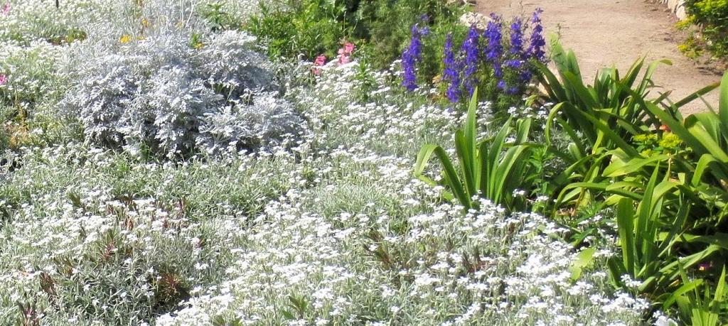 Bodembedekkers met witte bloemen